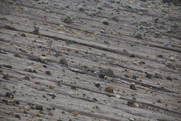 Lava Landschaft auf dem Kilimanjaro