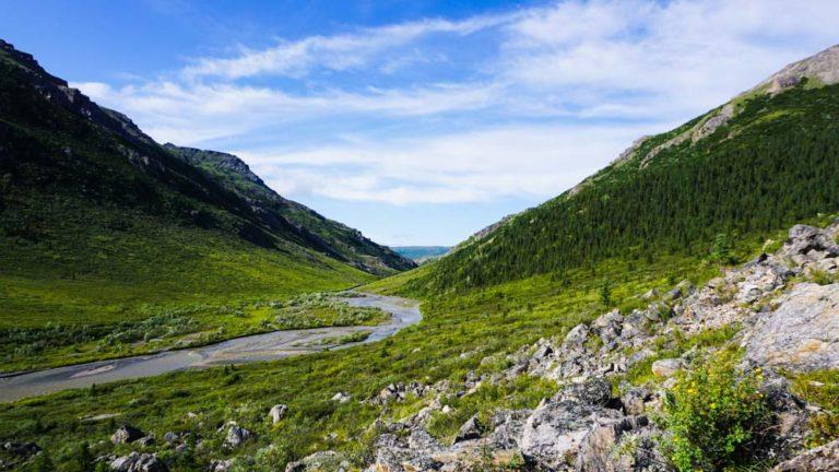 Denali Nationalpark Blick Mile 15