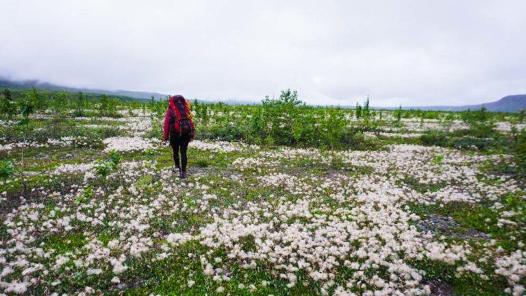 Wandern im Denali Nationalpark