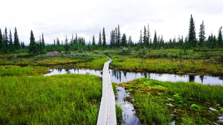 Wanderung im Denali Nationalpark zum McKinley River Bar